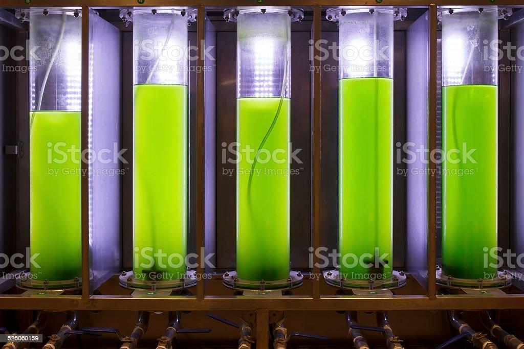 Photobioreactor in lab algae fuel biofuel industry . stock photo