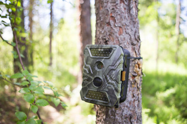 photocameras are mounted on a tree in the forest - trappola foto e immagini stock
