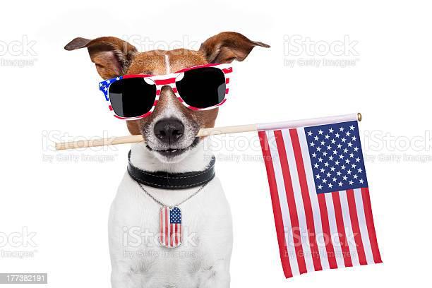 Photograph of a very american dog picture id177382191?b=1&k=6&m=177382191&s=612x612&h=l5wyqkxydceoxasvcl5v98ksi5vhoenbr9dojdhkns4=