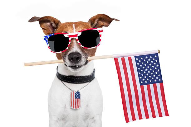 Photograph of a very american dog picture id177382191?b=1&k=6&m=177382191&s=612x612&w=0&h=6gjaxoonrol9hlvrsexxmm0libbwrsoekvmd2wf0tfa=