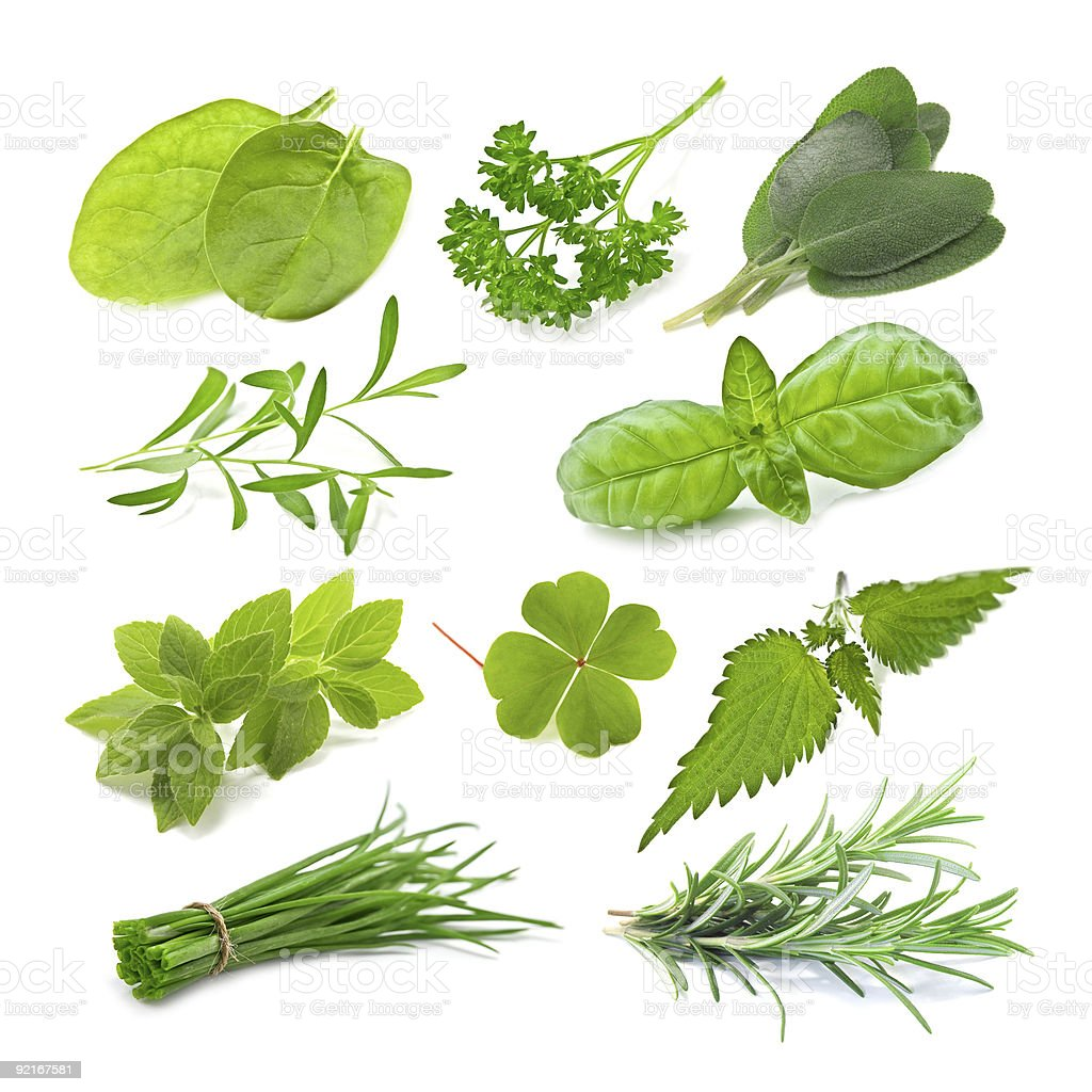 A photograph of multiple herbs royalty-free stock photo