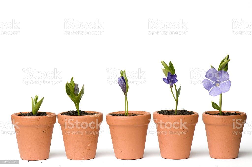 Flores unisexuality