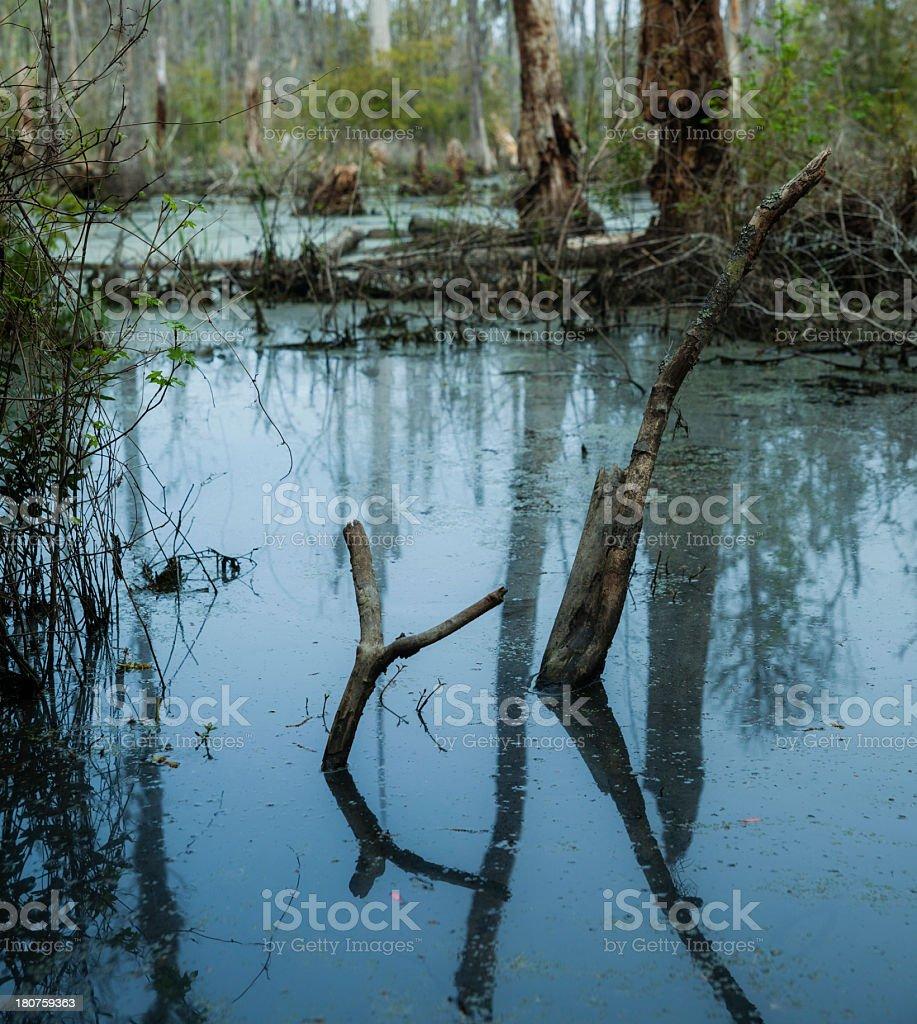 photograph of swamp in South Carolina, USA royalty-free stock photo