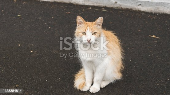 Photograph portrait of a sedentary cat. Street pet. Stray animals.