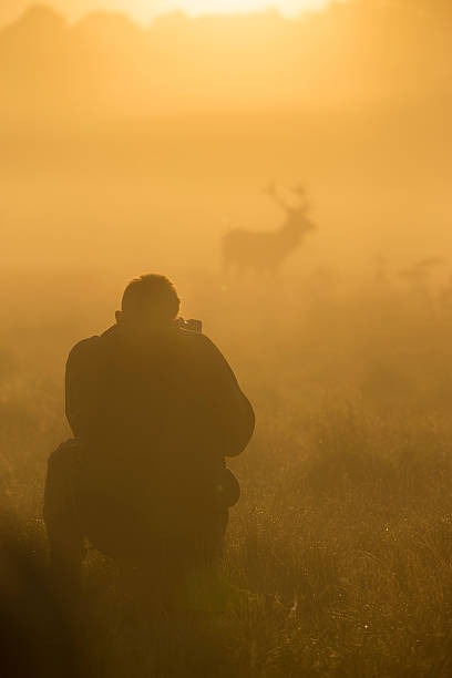 Photographer and red deer stag