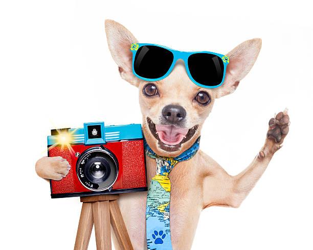 fotograf hund kamera - coole liebessprüche stock-fotos und bilder