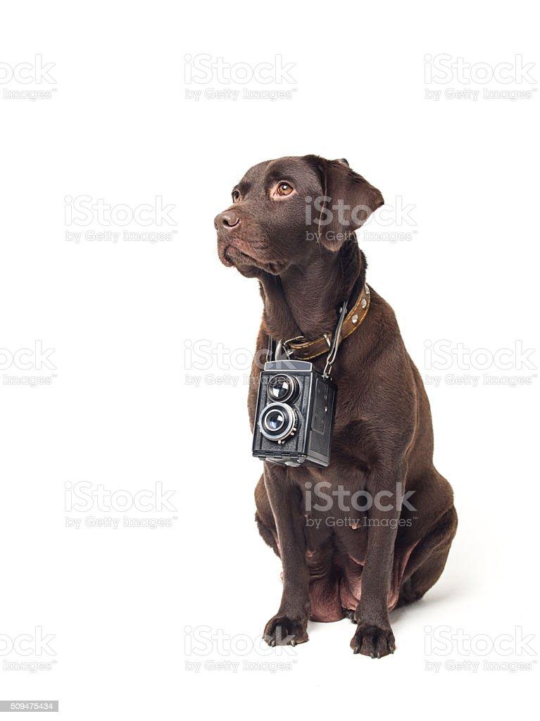 Photographer dog stock photo