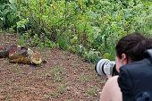 Photographer Photographing Galápagos Land Iguana on Santa Cruz Island, Galapagos.