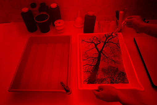 Photographer hand holding a developing photo with a tong, emerging from a development tray, inside a darkroom with printing tools and materials for analog photography, illuminated by a red light. A tree silhouette is the main image subject. Tanks filled with chemicals and various tools on the background. Bottles and trays with developer bath, stop bath and fixer. All pictures on paper constitute personal work.