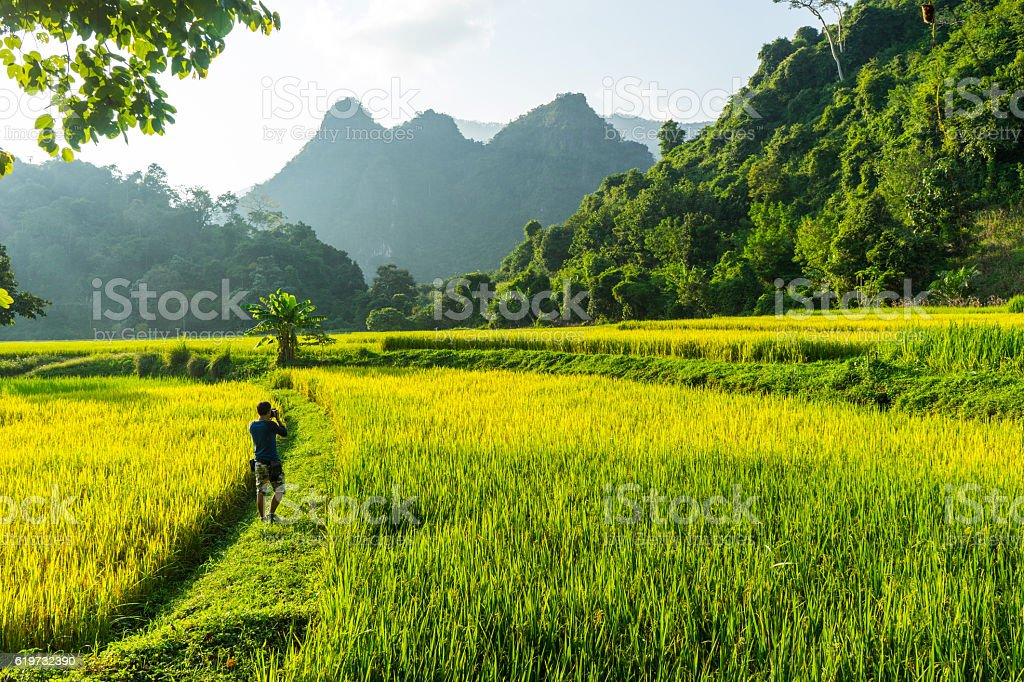 Photographer taking rice farm view shot. stock photo