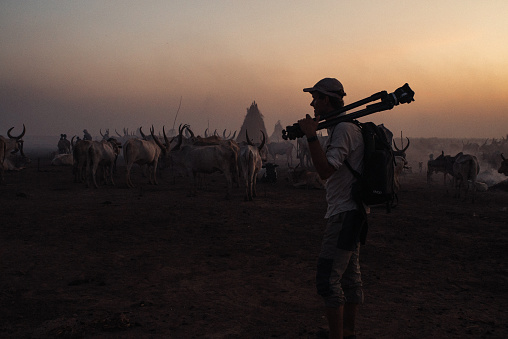Photographer walks in front of a cattle herd at sunset