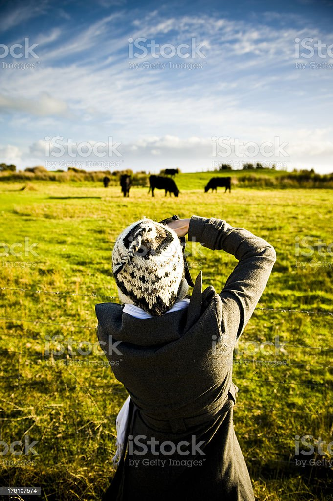 Photographer woman taking photos of cows on farm stock photo