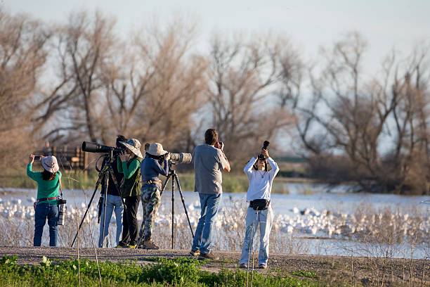 Photographers and Tourists at Merced National Wildlife Refuge, California Merced, California, USA - February 27, 2016: Photogrpahers and Toursts shooting Sandhill Cranes and White Geese at Merced National Wildlife Refuge. Some of them using professional telephoto lens. snow goose stock pictures, royalty-free photos & images