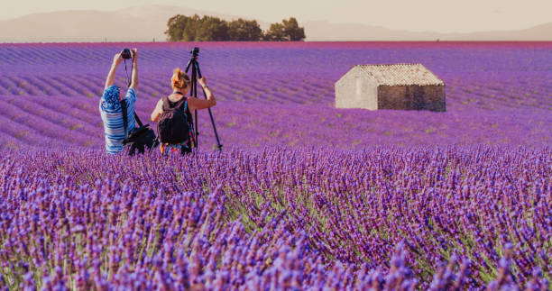 Photographers in lavender field, Valensole, Provence, France stock photo