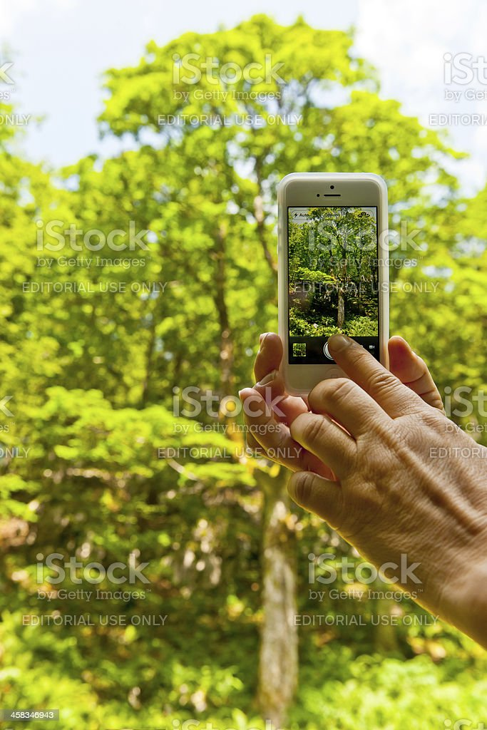 Photographing Beautiful Nature with Smart Phone royalty-free stock photo