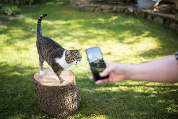 Photographing cat picture id1146290641?b=1&k=6&m=1146290641&s=612x612&w=0&h=u1j zgkcvmydwsu uavdadop0fnmyfm1mu5 j05vzak=