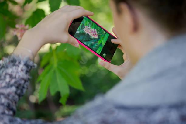 Blumen mit dem Smartphone fotografieren – Foto