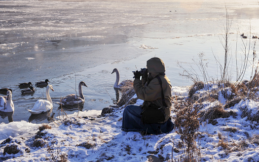 Photographing the swans and ducks at the edge of the Mosel River in Cochem,Germany