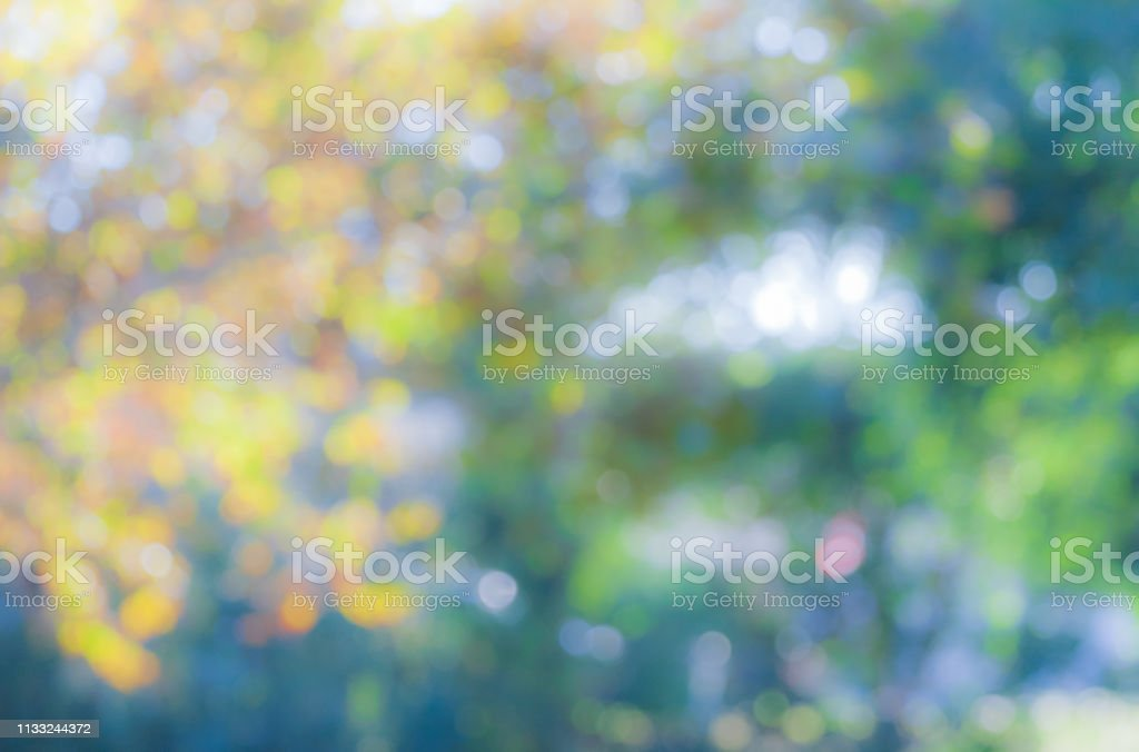 Photography Background - nature abstract, bokeh, leaves and trees stock photo