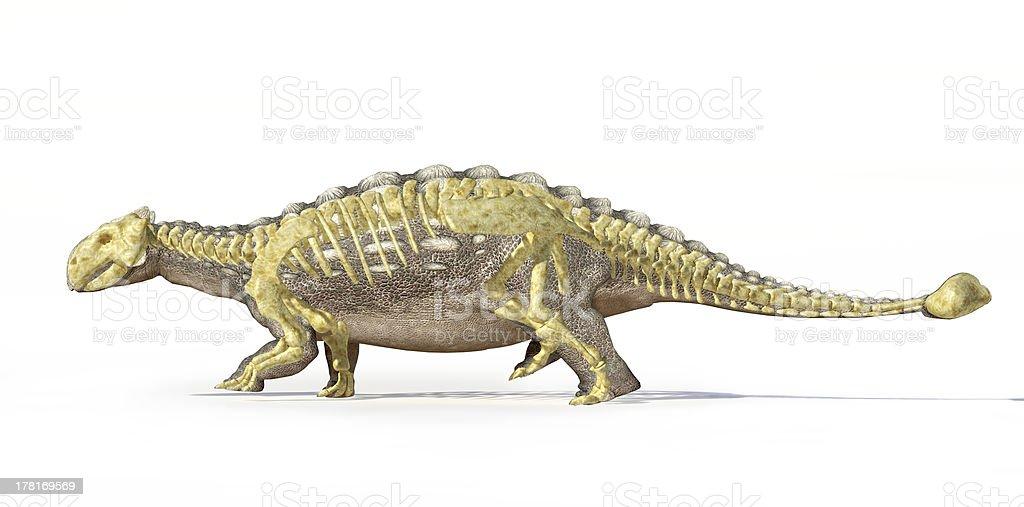 Fotorrealísticos representação artística em 3D de uma Anquilossauro, com um esqueleto sobrepostos - foto de acervo