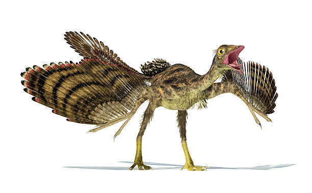 photorealistic representation of an archaeopteryx dinosaur. - croak stock pictures, royalty-free photos & images