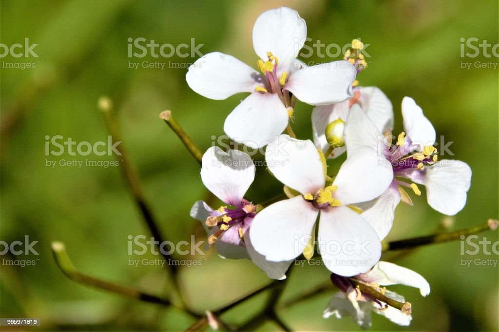 Photos of blooming flowers - Royalty-free Beleza Foto de stock