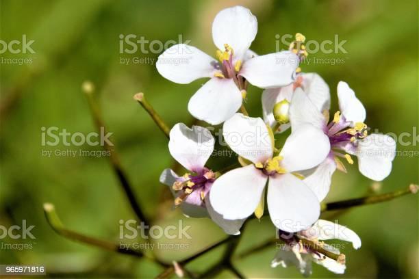Photos Of Blooming Flowers - Fotografias de stock e mais imagens de Beleza