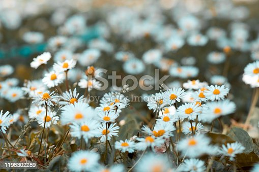 Photos of flowers in blurred backgrounds.