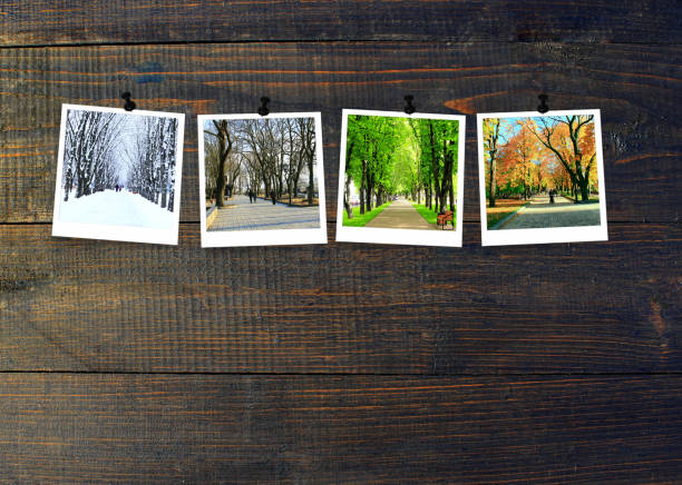Photos of four seasons attached to dark wooden wall. Seasons on dark background Four seasons on wooden background. Photos of four seasons attached to dark wooden wall. Four photos of same park taken at different times of year. Different times of year spring, summer, autumn,winter four seasons stock pictures, royalty-free photos & images