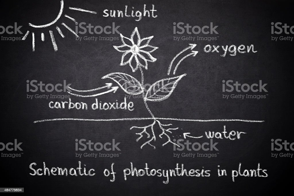 Photosynthesis biology lesson stock photo