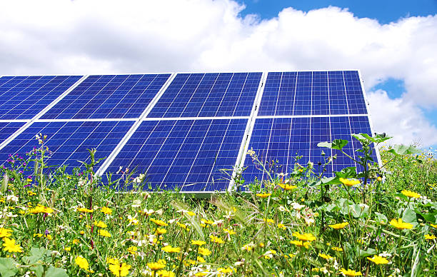 Photovoltaic panels and yellow flowers stock photo