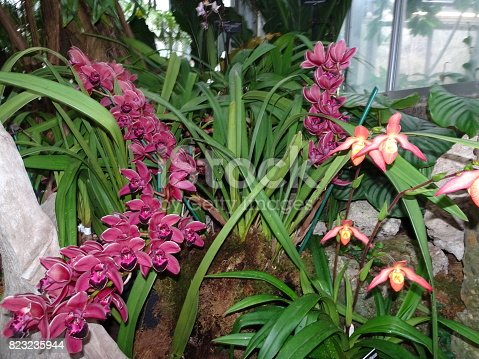 magenta orchids in garden bed of resort