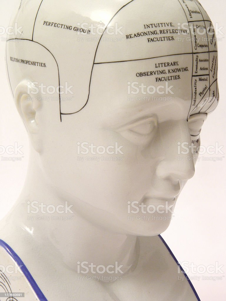 Phrenology Head from right royalty-free stock photo