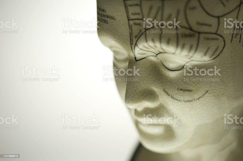 Phrenology Sculpture royalty-free stock photo