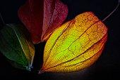 Physalis als Lampe Schöner Wohnen Ambiente Licht Lampion Laterne
