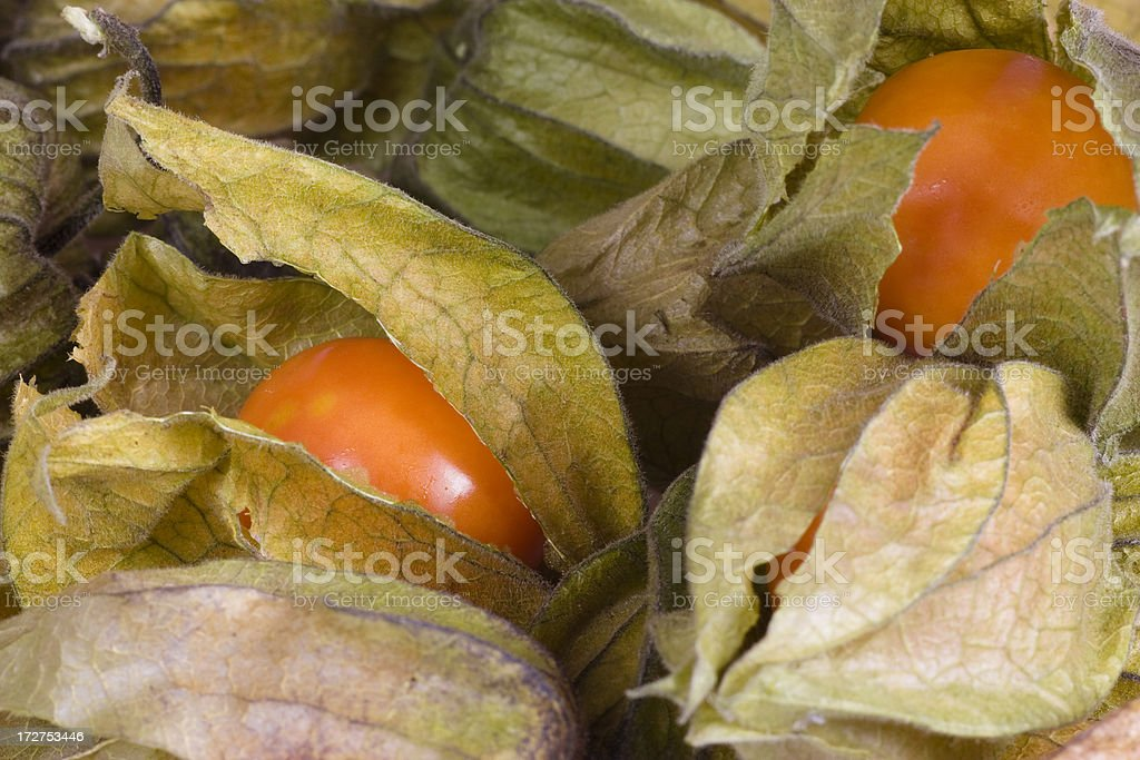 Physalis - Cape Gooseberry royalty-free stock photo