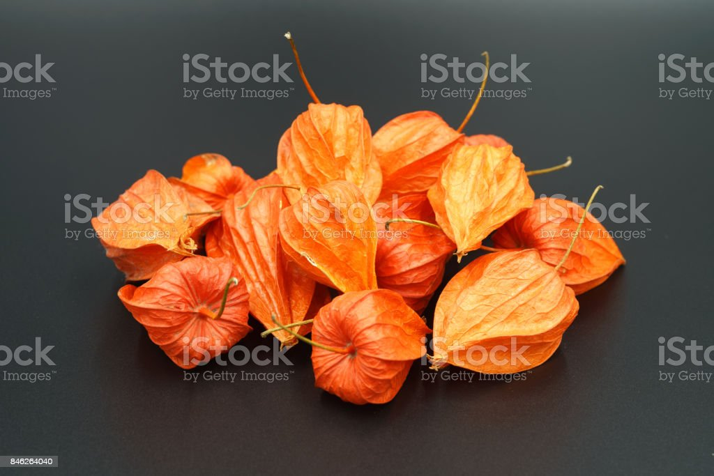 Physalis - fruit bushes of the Pasolen family. stock photo