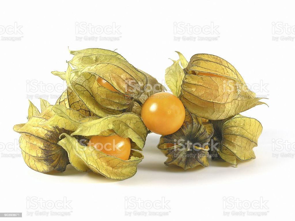 Physalis fruit royalty-free stock photo