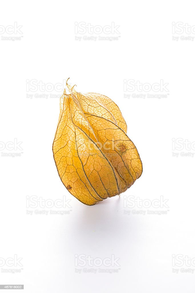 Physalis heap isolated on white stock photo