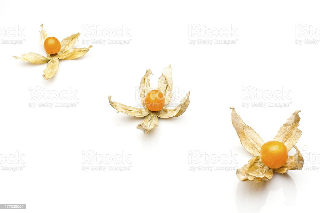 physalis isolated on white royalty-free stock photo