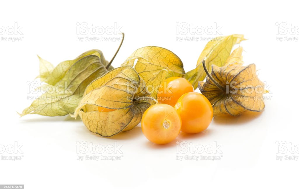 Physalis isolated on white stock photo