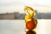 Physalis peruviana, Cape gooseberry, goldenberry on a reflective surface against the background of the city.
