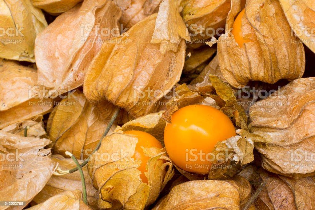 Physalis, winter cherries, cape gooseberries, ground cherries, chinese lantern, aguaymanto. stock photo