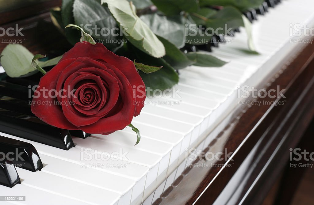 piano and rose royalty-free stock photo