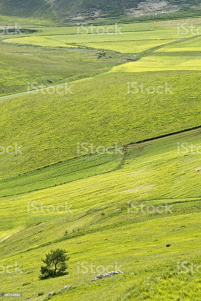 Piano Grande di Castelluccio (Umbria, Italy) - Green landscape royalty-free stock photo