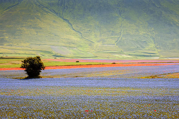 Piano Grande di Castelluccio, Village on a green hill,Italy Castelluccio di Norcia (Perugia, Umbria, Italy) - The small old village in the Monti Sibillini Natural Park, landscape at summer in a bright summer afternoon, with cultivated fields and meadows,Italy, Nikon D3x umbria stock pictures, royalty-free photos & images