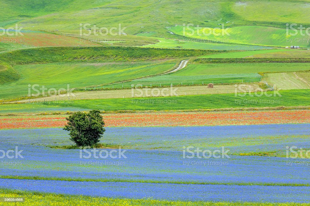 Piano Grande di Castelluccio, Village on a green hill,Italy royalty-free stock photo