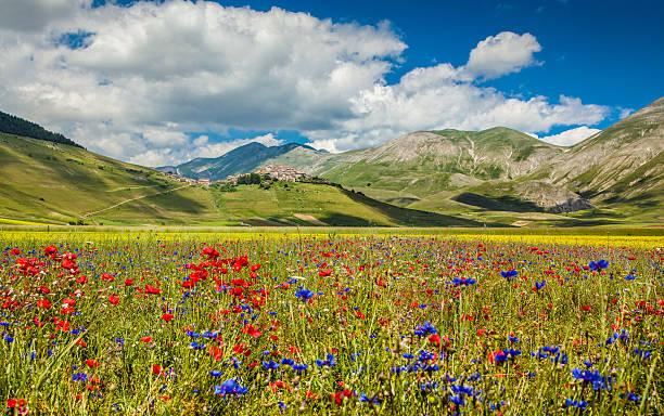 Piano Grande paisaje de verano, Umbria, Italia - foto de stock