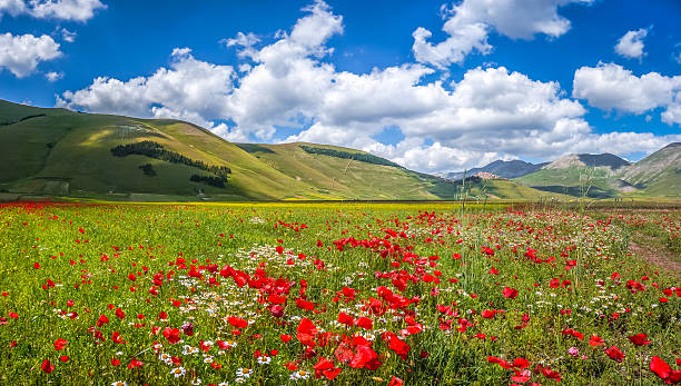 Piano Grande summer landscape, Umbria, Italy Beautiful summer landscape at Piano Grande (Great Plain) mountain plateau in the Apennine Mountains, Castelluccio di Norcia, Umbria, Italy umbria stock pictures, royalty-free photos & images