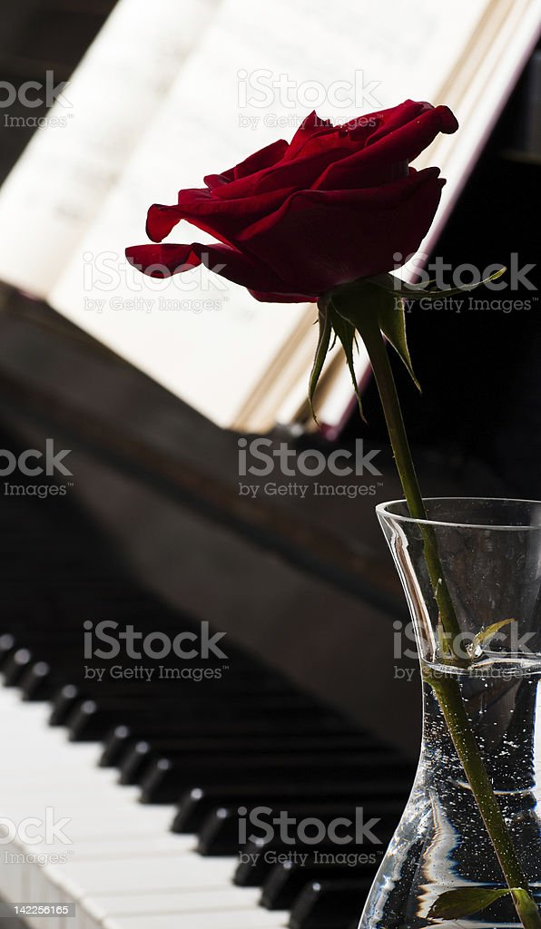piano keyboard and rose royalty-free stock photo